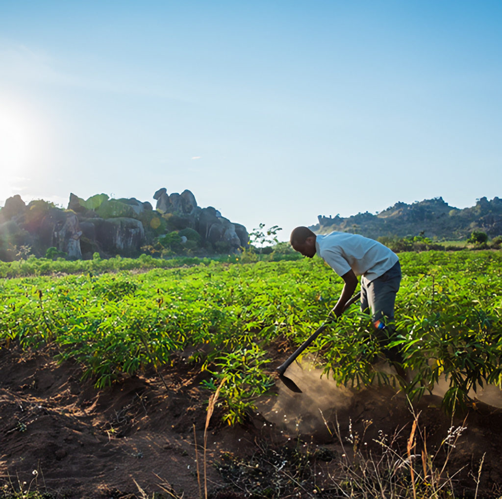Farmer of Coffee Beans Tilling Soil Tanzania